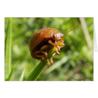 Gorse Bug Macro Greeting Card