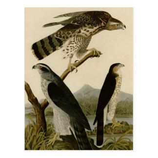 Goshawk & Stanley Hawk Post Cards