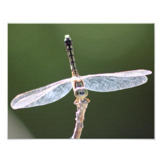 Gossamer Dragonfly Photography Photograph