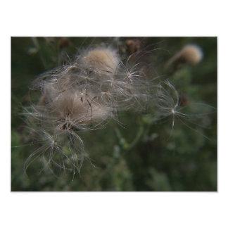 Gossamer Seed Pods Photo Print