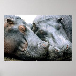 Gossip Hippopotamus Portrait Poster