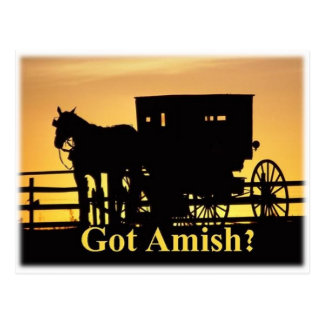 Got Amish? Postcard