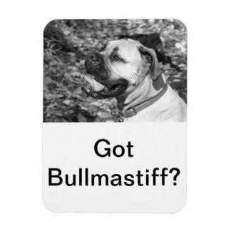 Got Bullmastiff Rectangle Magnet