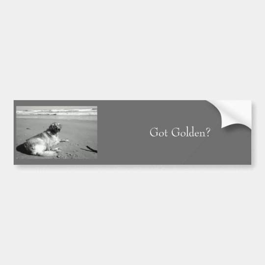 Got Golden? Bumper Sticker