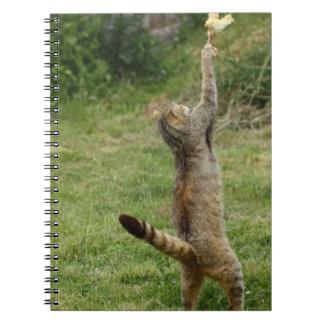 Got It! notebook