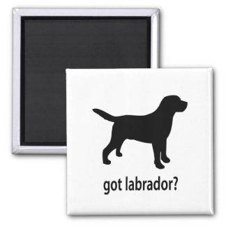 Got Labrador Magnet