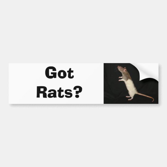 Got Rats?, Got Rats? Bumper Sticker