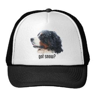 got snow? Bernese Hat