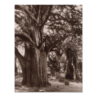 """Gothic Themed Party Invitations Old Yew Graveyard 4.25"""" X 5.5"""" Invitation Card"""