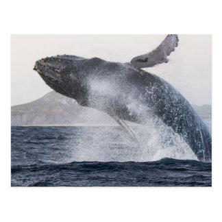 GotScience.org postcard: Humpback whale Postcard