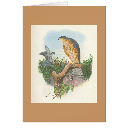 Gould - Accipiter nisus Sparrowhawk Card