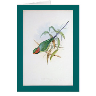 Gould - Allied Parakeet Greeting Card