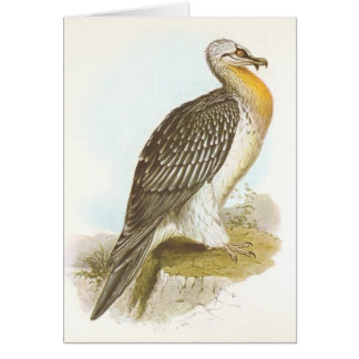 Gould - Bearded Vulture - Lammergeyer Card