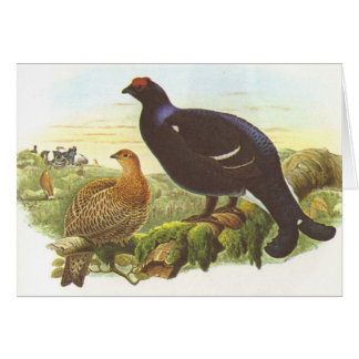 Gould - Black Grouse - Lyrurus tetrix Card
