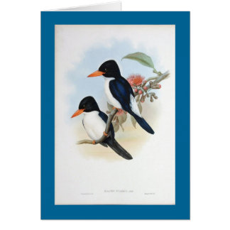 Gould - Blue and White Kingfisher Card