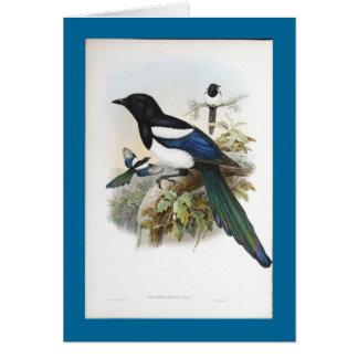 Gould - Bootan Magpie Card