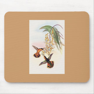 Gould - Fawn-Breasted Sabre Hummingbird Mouse Pads