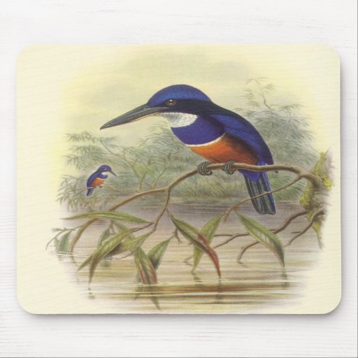 Gould - Four-Coloured Kingfisher Mouse Mats