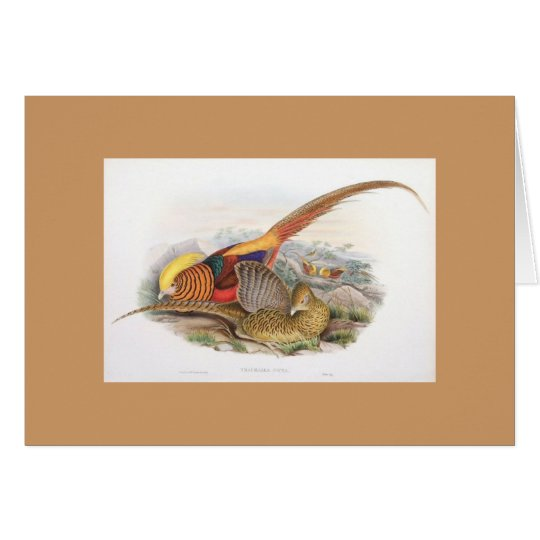 Gould - Golden Pheasant Card