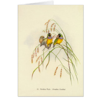 Gould - Gouldian Finch Card