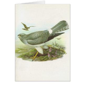 Gould - Hen Harrier - Circus cyaneus Cards