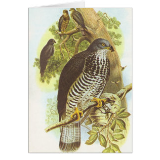 Gould - Honey Buzzard - Pernis apivorus Card