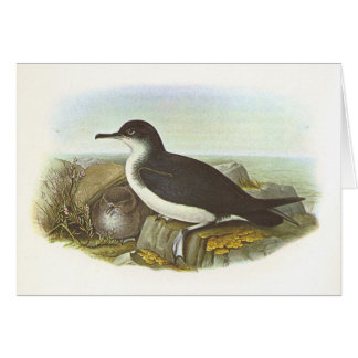 Gould - Manx Shearwater - Procellaria puffinus Card