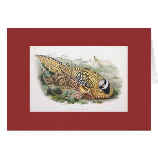 Gould - Reeve's Pheasant Greeting Card