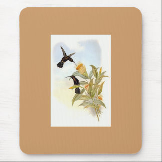 Gould - Sooty Barbed-Throat Hummingbird Mouse Pad
