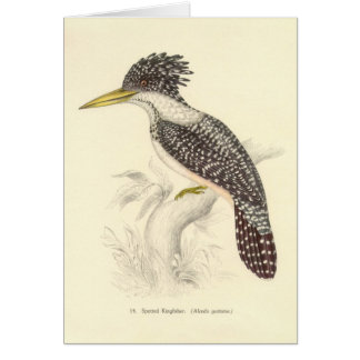 Gould - Spotted Kingfisher Card