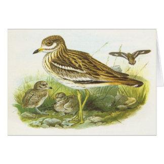 Gould - Stone Curlew - Burhinus oedicnemus Card