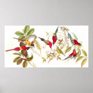 Gould Sunbird Birds Poster