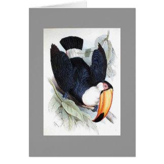 Gould - Toco Toucan Card