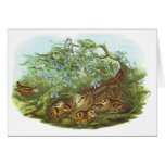 Gould - Woodcock - Scolopax rusticola Greeting Cards