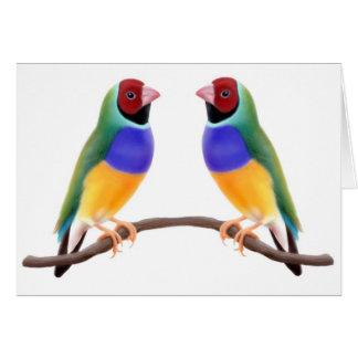 Gouldian Finch Friends Card