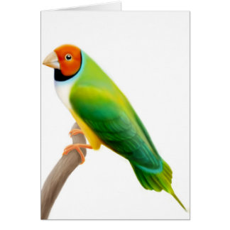 Gouldian Finch Orange Headed Card