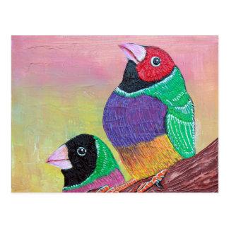 Gouldian Finch Postcard
