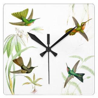 Goulds Hummingbirds Wall Clock