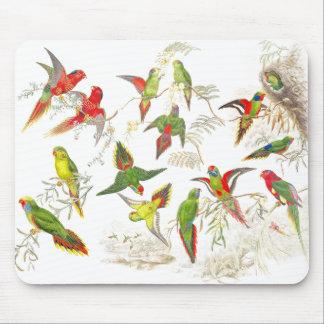 Goulds Lorikeet Parrot Birds Mousepad