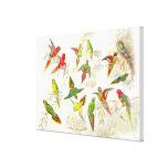 Goulds Lorikeet Parrot Birds Wrapped Canvas Print