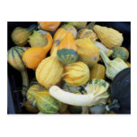 Gourd Collection Postcards