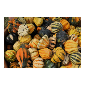 Gourds Galore! - poster