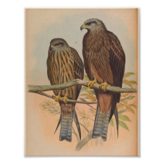 Govinda Kite Brown Bird Vintage Art Print