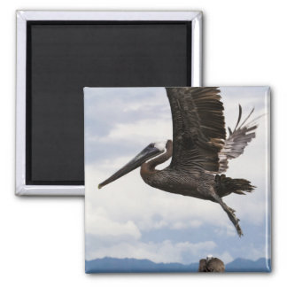 Graceful Brown Pelican 2 Inch Square Magnet
