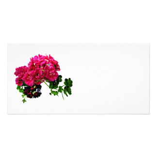 Graceful Geraniums Custom Photo Card