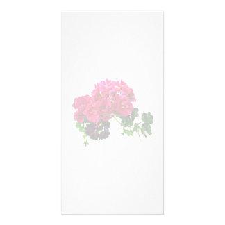 Graceful Geraniums Photo Cards