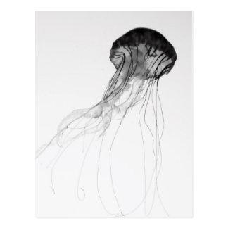 Graceful Jellyfish Postcard