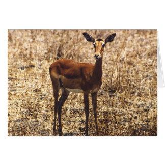 Graceful Lady (Impala) Card