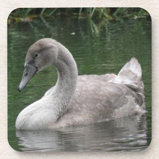 Graceful Swan on the Water Cork Coaster