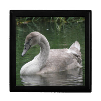 Graceful Swan on the Water Gift Box